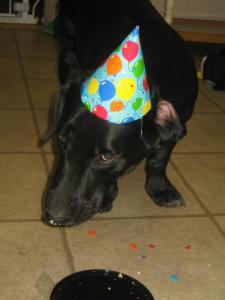 corgidor birthday party